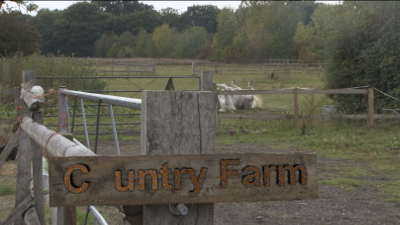 Cuntry Farm